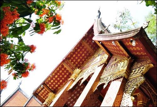 Luang Prabang, mùa hoa vô ưu nở - 5