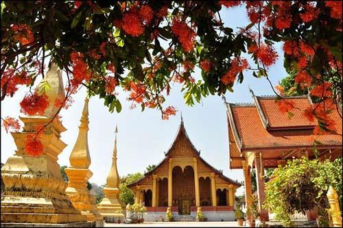 Luang Prabang, mùa hoa vô ưu nở - 1