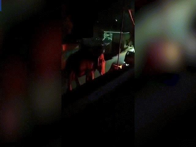 Video: Kinh hoàng voi bị đốt tai đến chết ở Ấn Độ