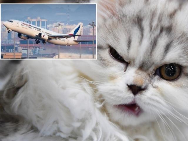 """Máy bay hạ cánh khẩn cấp vì phi công bị """"vị khách không mời"""" tấn công"""