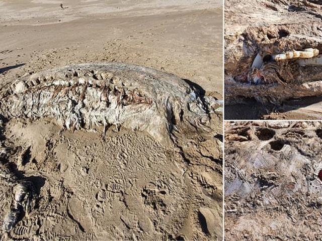 Xác quái vật biển dài 7 mét, nặng 4 tấn trôi dạt bờ biển Xứ Wales