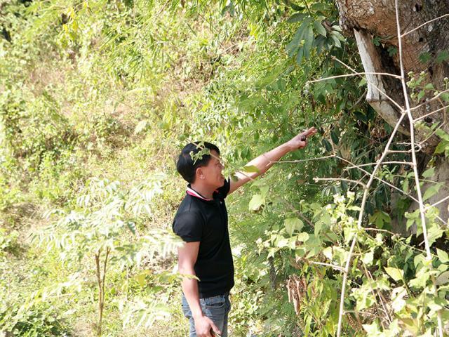Theo chân dị nhân đi săn ong rừng và những bí mật trong nghề chưa từng tiết lộ