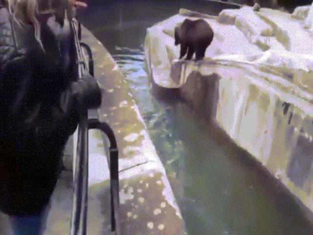 Video: Say rượu, thanh niên làm điều không tưởng với gấu