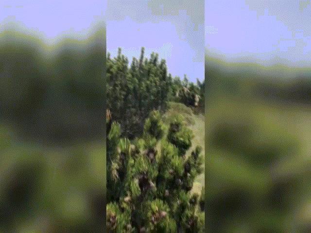 Video: Bị gấu khổng lồ bám theo, cậu bé thoát nạn bằng cách không ngờ