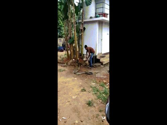 """Video: Người đàn ông dội nước, tắm cho hổ mang chúa khổng lồ gây """"bão"""""""