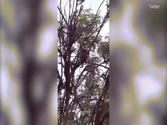 Ấn Độ: Đội quân khỉ ngang nhiên cướp mẫu xét nghiệm Covid-19