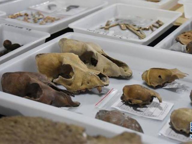 Phát hiện hé lộ nền văn minh 8.000 năm lịch sử ở Trung Quốc