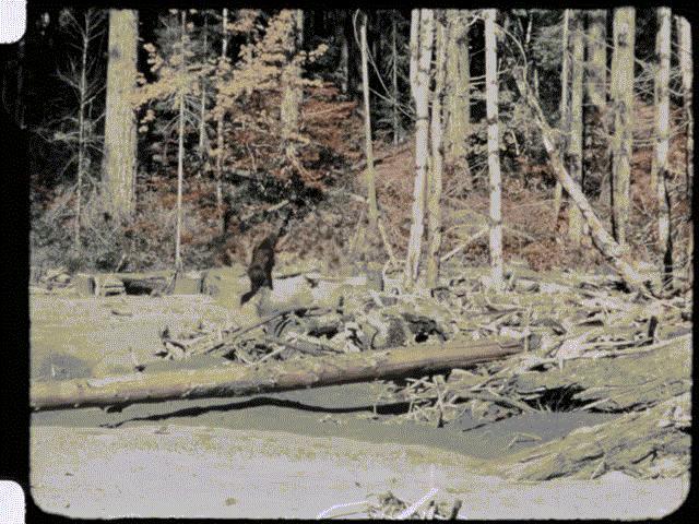 Những lần quái vật Bigfoot huyền thoại lộ diện khiến dân tình ớn lạnh sống lưng