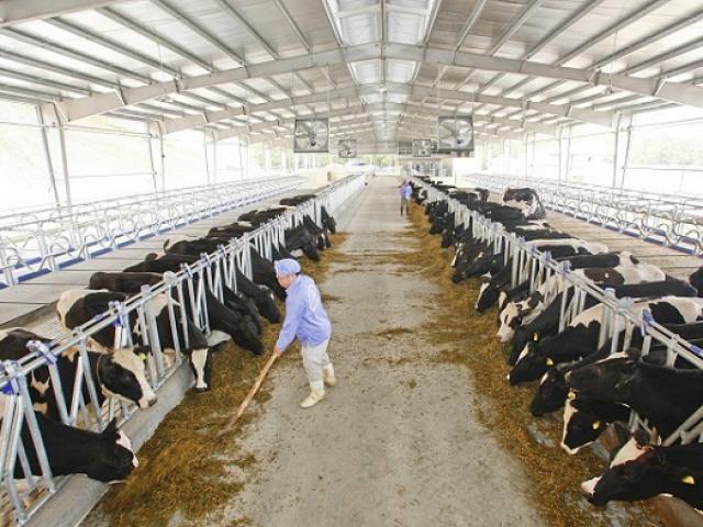 Nông nghiệp – lĩnh vực lớn thứ 2 của Hòa Phát suy giảm, bán lỗ hàng trăm nghìn quả trứng mỗi ngày