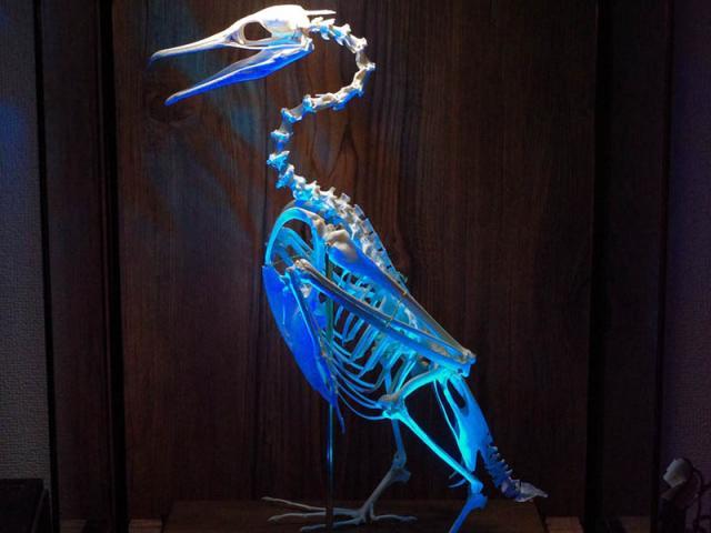 Người đàn ông biến ngôi nhà của mình thành một viện bảo tàng xương động vật