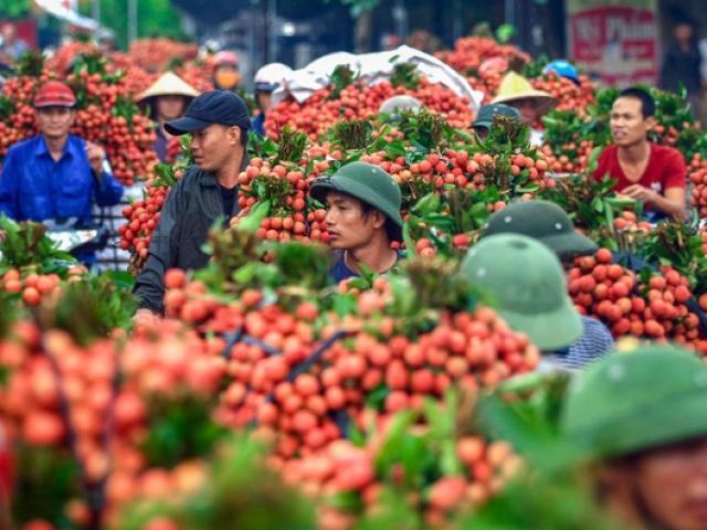 Nóng tuần qua: Giữa tâm dịch, 190 thương lái Trung Quốc sẽ được vào VN mua vải thiều
