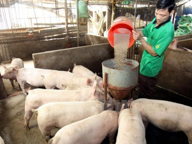Giá lợn hơi giảm tới 20 nghìn đồng/kg, người chăn nuôi nói gì?