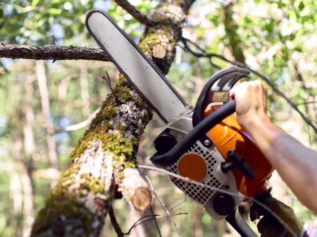 Đang cưa cây, bị máy cưa cứa vào cổ nguy kịch