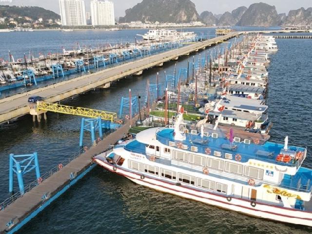 """Hơn 500 tàu du lịch Hạ Long """"ngủ đông"""", hàng loạt chủ tàu đối diện nguy cơ vỡ nợ"""