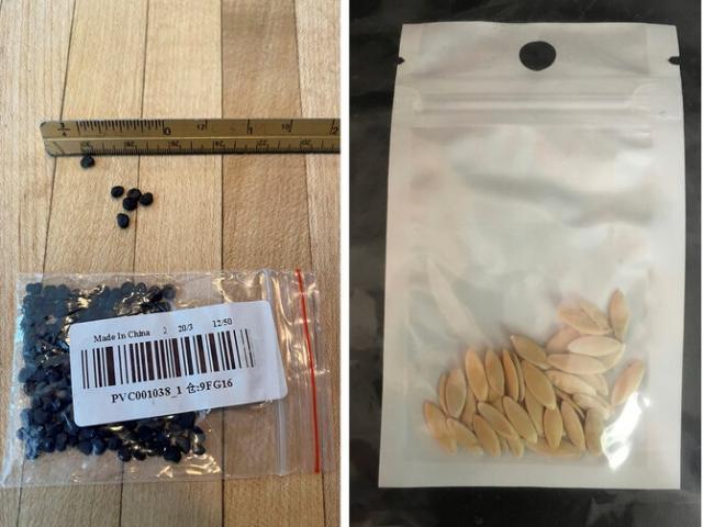"""Mỹ: Tìm ra """"chân tướng"""" những gói hạt giống bí ẩn gửi từ Trung Quốc?"""