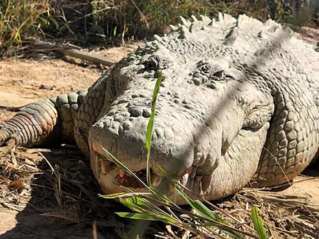 Cá sấu khổng lồ nổi tiếng nhất thế giới qua đời ở tuổi 100