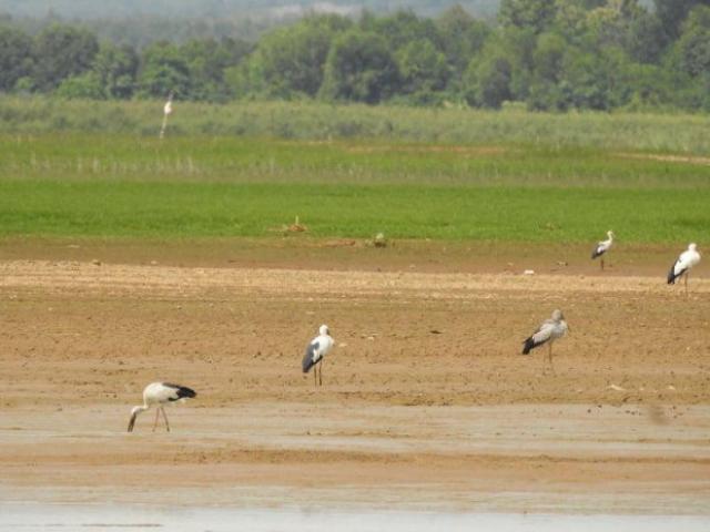 Tin tức 24h qua:Hàng trăm con chim quý xuất hiện ở hồ thủy điện Trị An, Đồng Nai