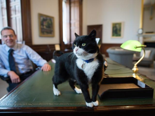 """Mèo """"làm quan"""" ở nước Anh chính thức được nghỉ hưu"""