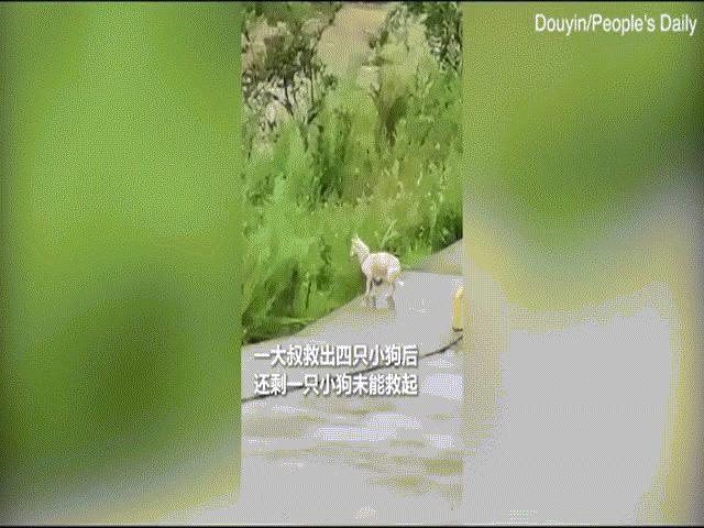 Video: Chó mẹ lao xuống dòng nước lũ cứu con, đám đông đứng xem vỗ tay không ngớt