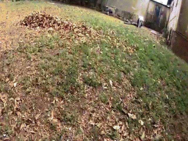Video: Rắn kịch độc nguy hiểm nhất châu Phi ngụy trang ở vườn nhà khiến người phụ nữ sốc