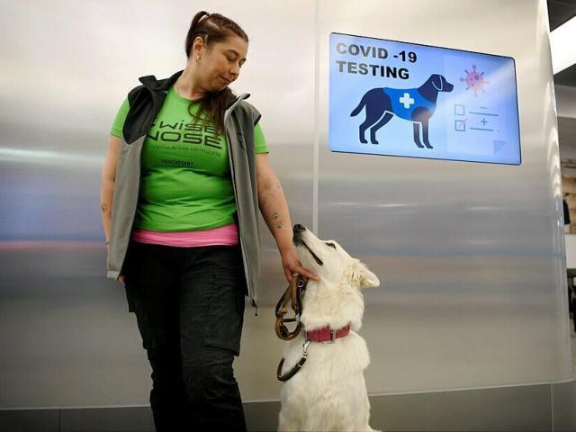Quốc gia đầu tiên thế giới dùng chó dò người nhiễm Covid-19, bất ngờ với kết quả