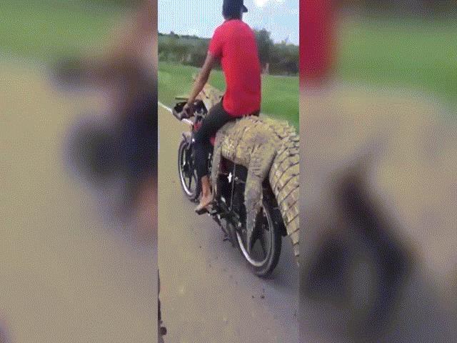"""Video: Liều lĩnh dùng cá sấu còn sống làm """"yên"""" xe máy, 2 thanh niên gặp họa"""