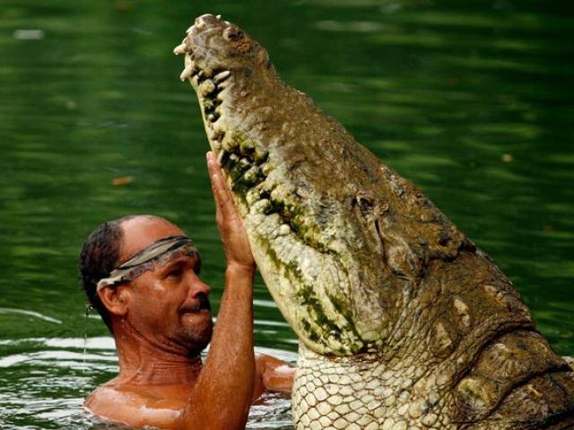 """Nuôi cá sấu """"quái vật"""" hơn 400 kg, vừa thả đi hôm sau thấy điều không ngờ"""