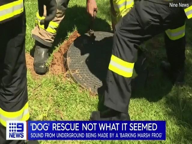 Nghe tiếng sủa dưới cống, 16 nhân viên cứu hỏa xuống giải cứu phát hiện điều lạ lùng