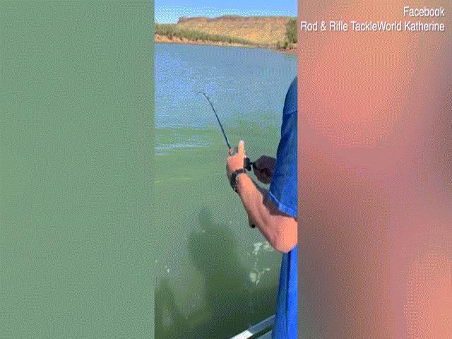 Video: Tưởng câu được cá