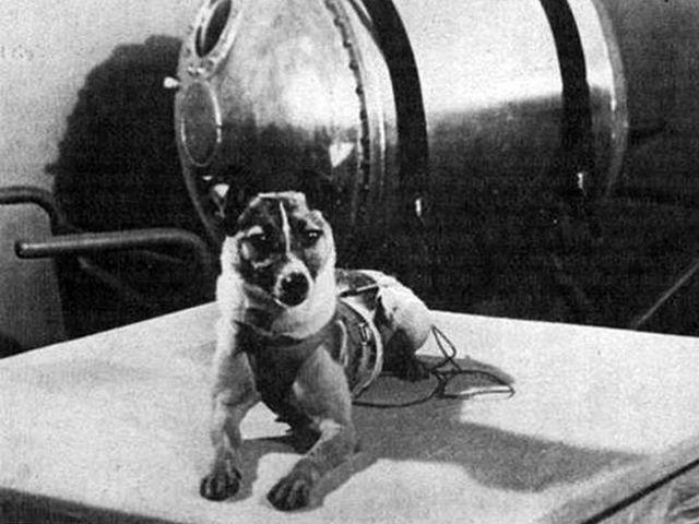 Có đến 10 loại động vật đã từng được đưa ra ngoài vũ trụ