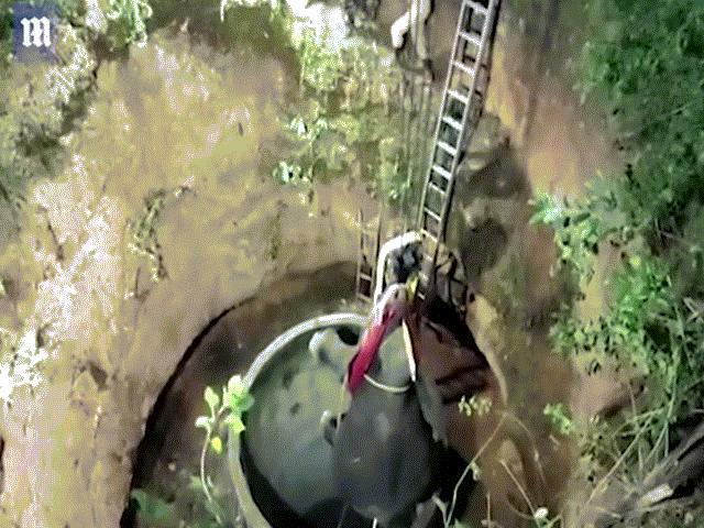 Video: Voi Ấn Độ bị chó đuổi ngã xuống giếng sâu 15 mét và cuộc giải cứu ly kỳ