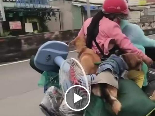 Cộng đồng mạng tiếc thương '15 con chó bị tiêu hủy ở Cà Mau'
